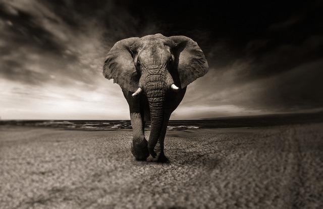 elephant graufilter